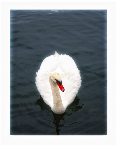 The-Swan--NEW-ENGLAND